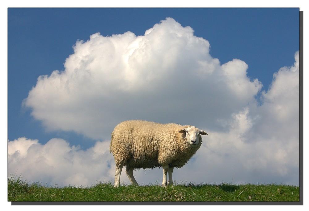 Als Schaf bin ich `ne Wolke!