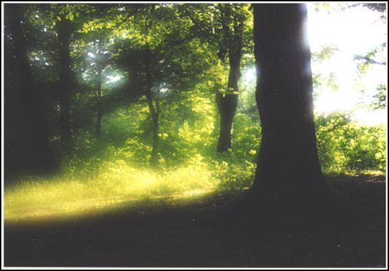 ....als sich Rotkäppchen im Wald verirrte