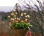Als ultimatives Mittel gegen den Winter im Frühling...