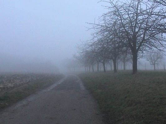 alsace fog