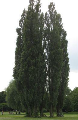 Alsterpark