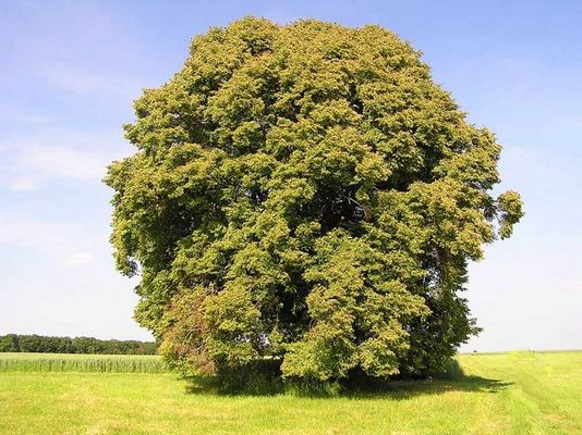 """""""Alt wie ein Baum...."""""""