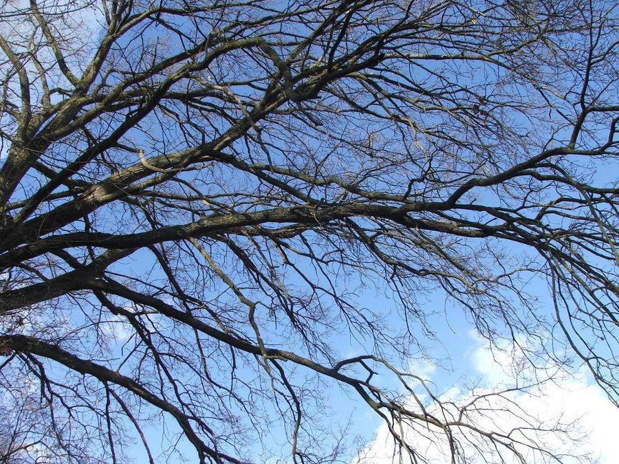 """""""Alt wie ein Baum..."""""""