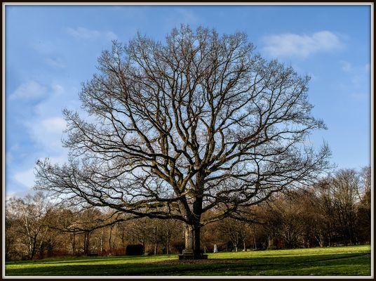 """""""Alt wie ein Baum"""""""