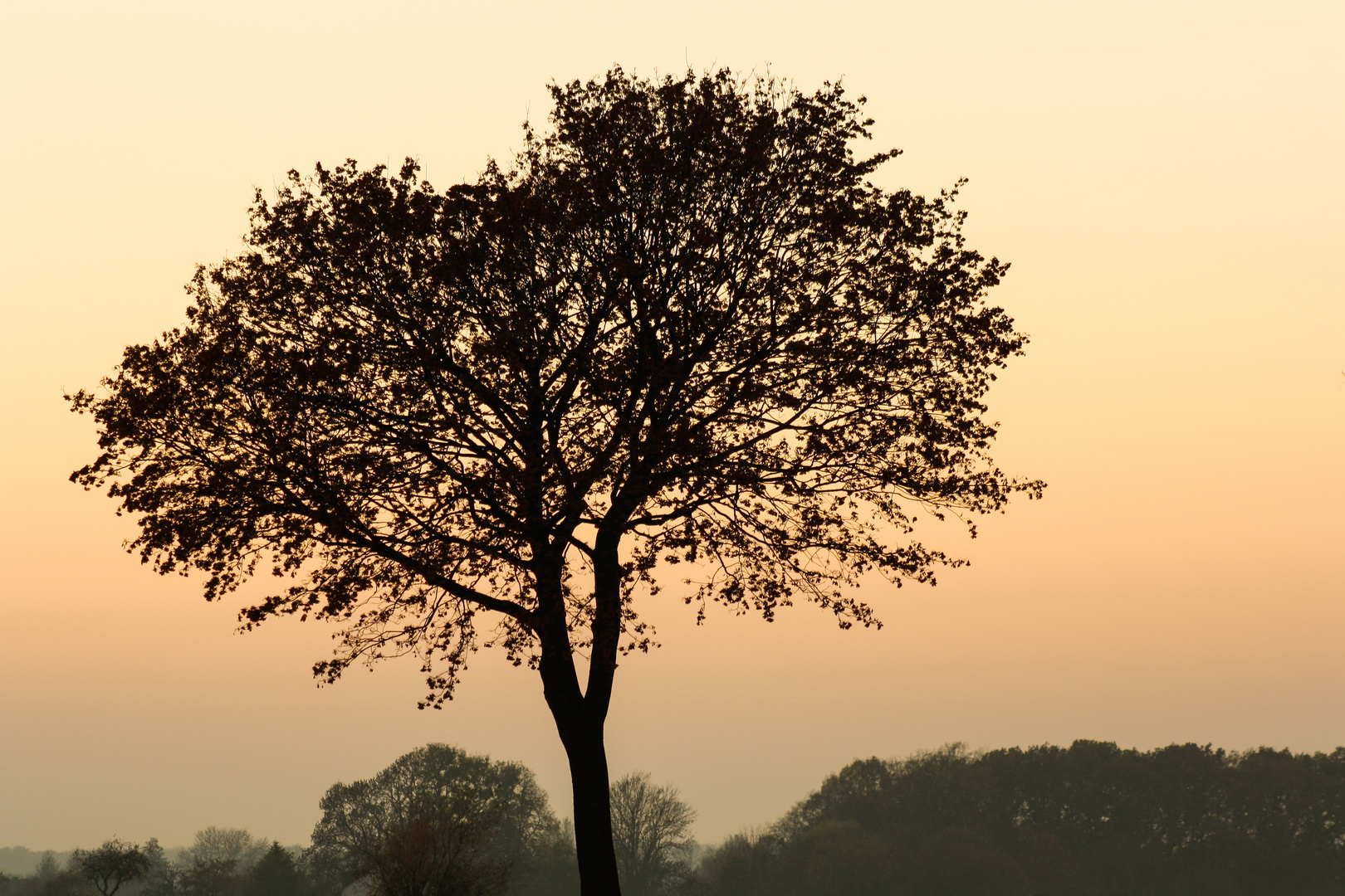 Alt wie ein Baum.............