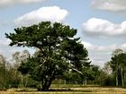 """"""" Alt wie ein Baum möchte ich werden """""""