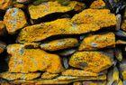 Alt wie ein Stein - Flechtenbesetzte Mauer