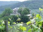 alte Burg mit Weinreben an der Mosel