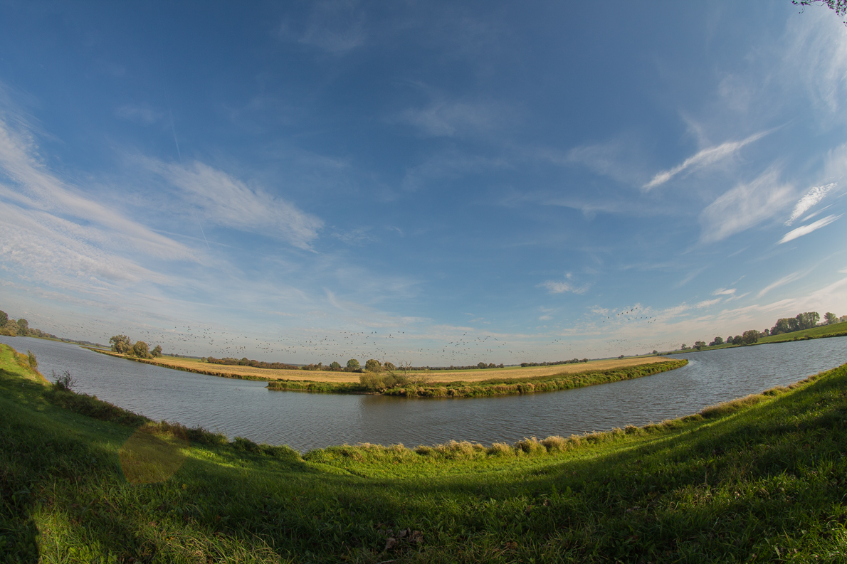 Alte Elbe Bösewig Vogelzug