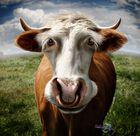 Alte Kuh