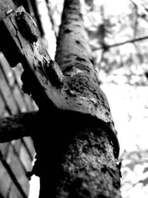 alte Leiter