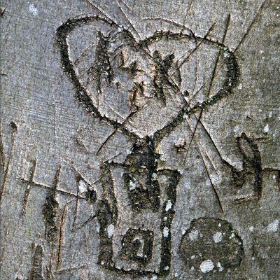 Alte Liebe verewigt in einem Buchenstamm