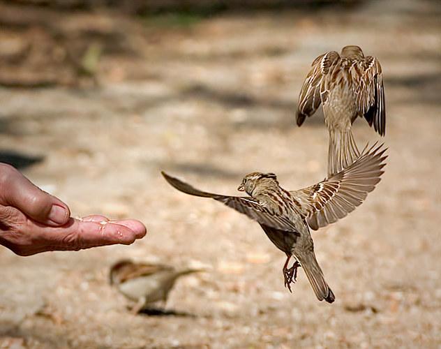 ...Alte Mann und Vögel