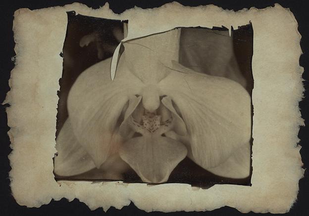Alte Orchidee