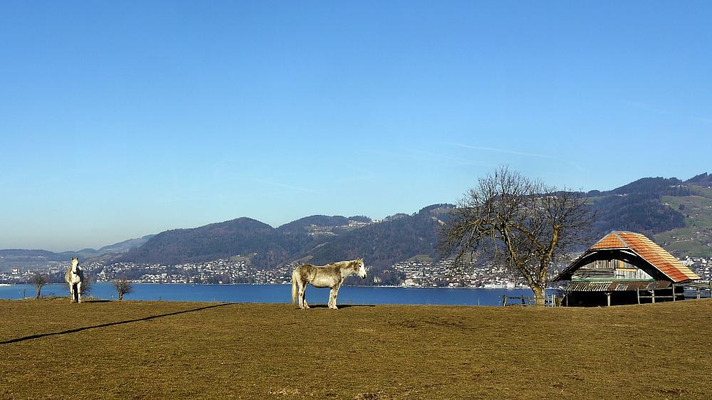 alte Pferde im Asyl auf der Weide