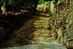 alte steinige Naturwege mit vielen Pflanzen gesäumt
