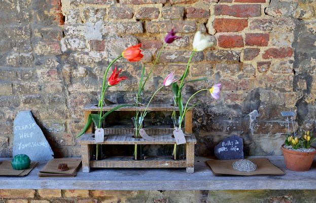 alte tulpensorten in sissinghurst (kent)