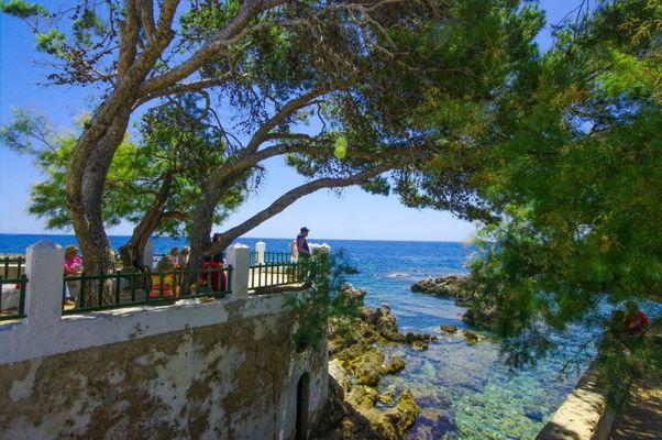 """Alte verwucherte """"Pinie""""??? an der ostküste Mallorcas"""