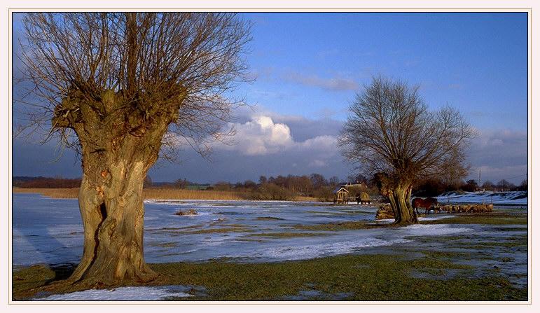 Alte Weiden am Grimnitzsee