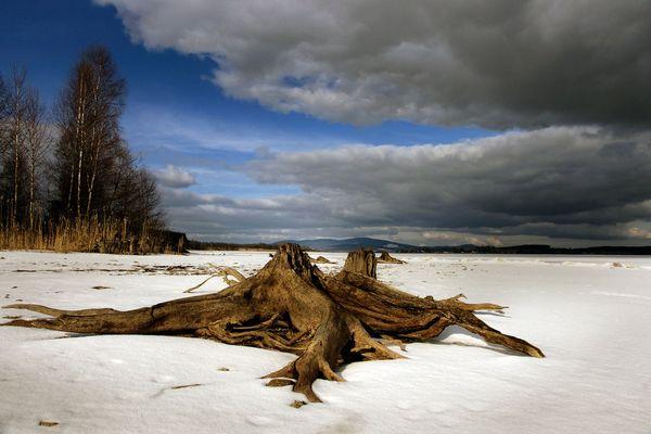 Alte Wurzeln auf frischem Eis