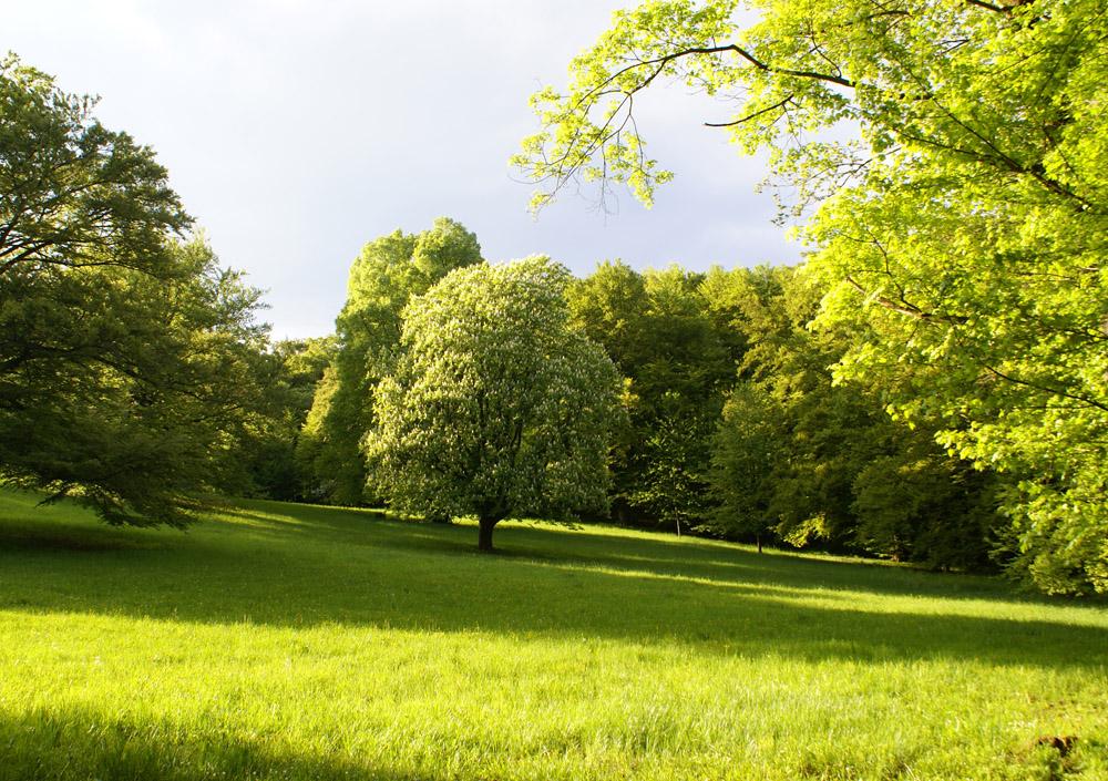 Altensteiner Park bei Bad Liebenstein