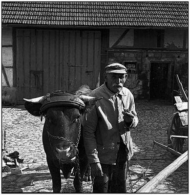 Alter Bauer mit seiner Kuh