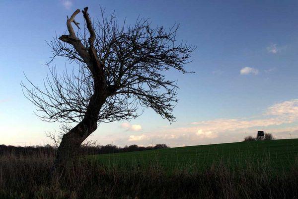 Alter Baum...