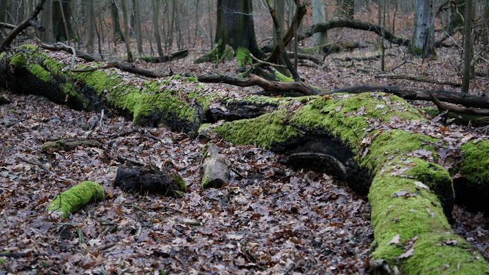 Alter Baum - aber immer noch Grün!