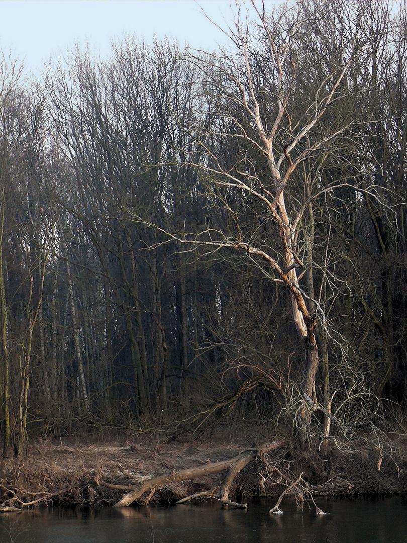 alter Baum am Fluss