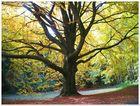 Alter Baum im Herbst