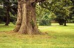 Alter Baum im Park