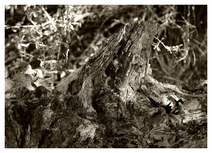 Alter Baumstumpf