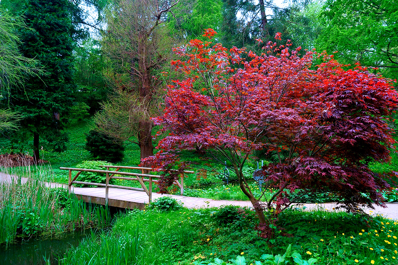 Alter Botanischer Garten Kiel: Alter Botanischer Garten Kiel Foto & Bild