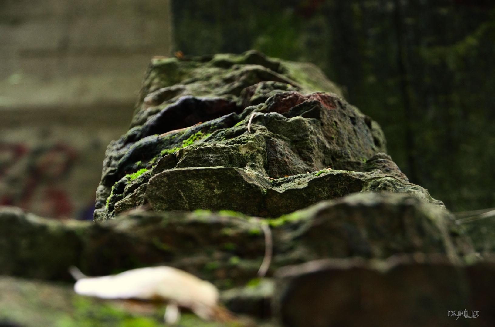 alter Bunkeranlagen im Wald