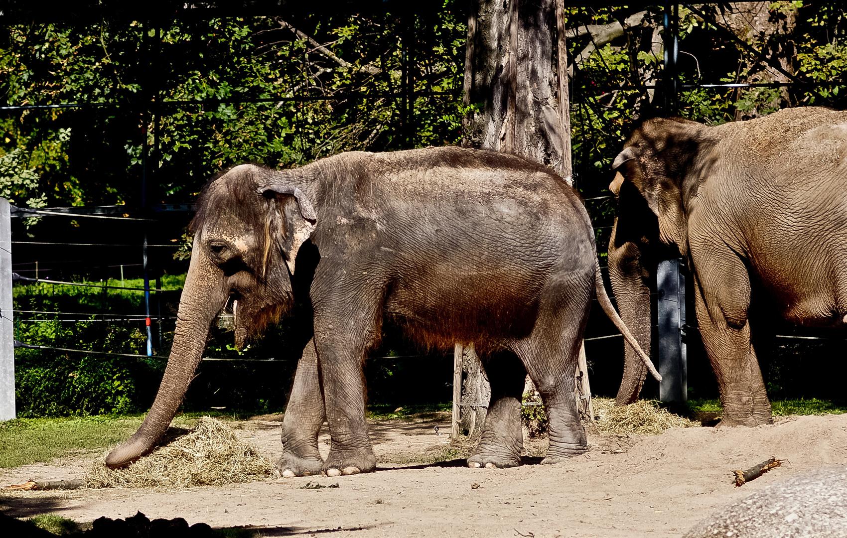 Alter Elefant
