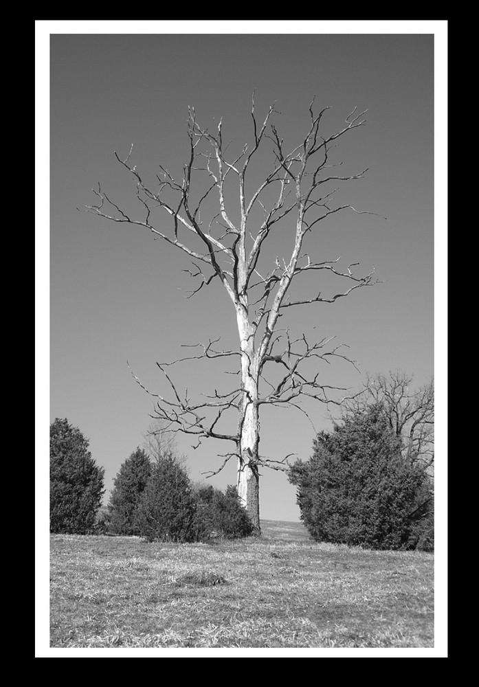 alter kaler Baum