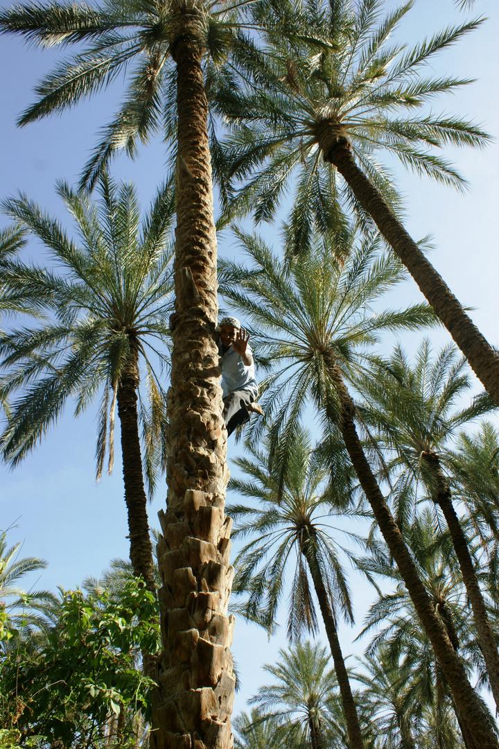 alter mann am Baum