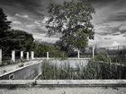 Alter Swimmingpool - die Natur kehrt zurück
