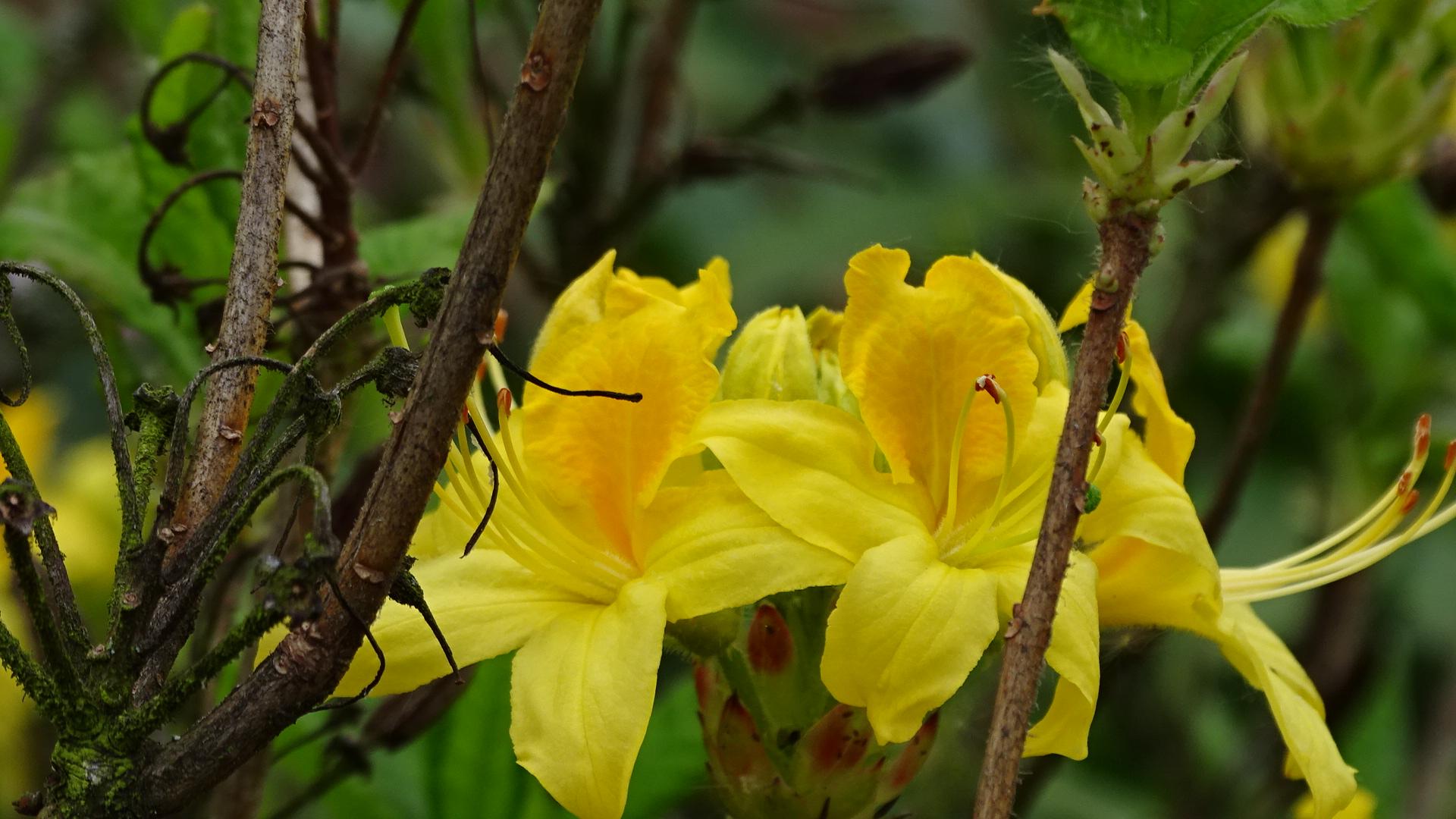 Alter Zweig und neue Blüten