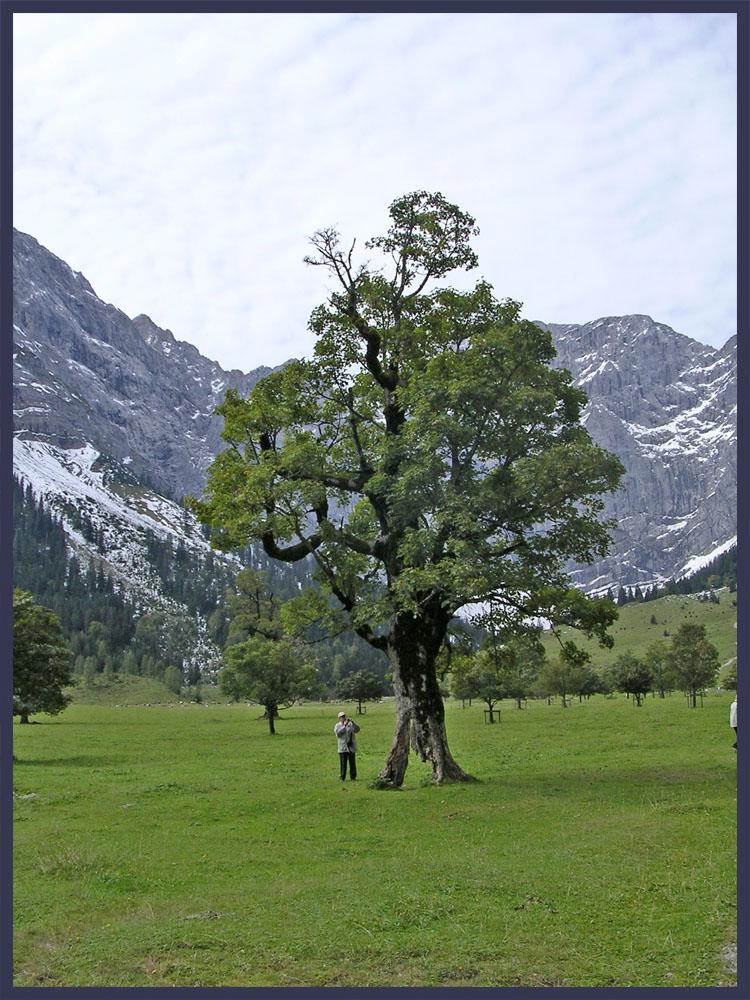 Alterbaum