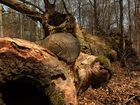 Altersschwacher Baum