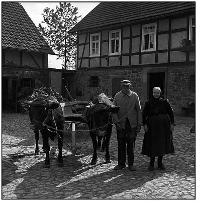 Altes Bauernpaar und seine Kühe