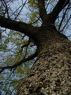 Altes Baum in meinem Dorf