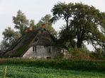 altes Haus in voller Blüte (Herbst 2006)