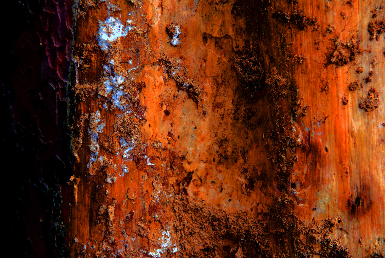 Altes Holz 1