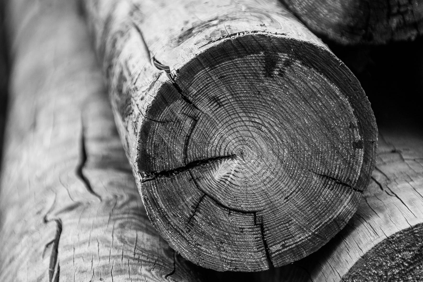 """""""Altes Holz"""""""