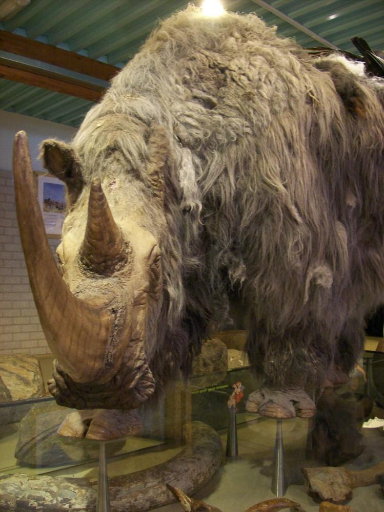 Altes Nashorn