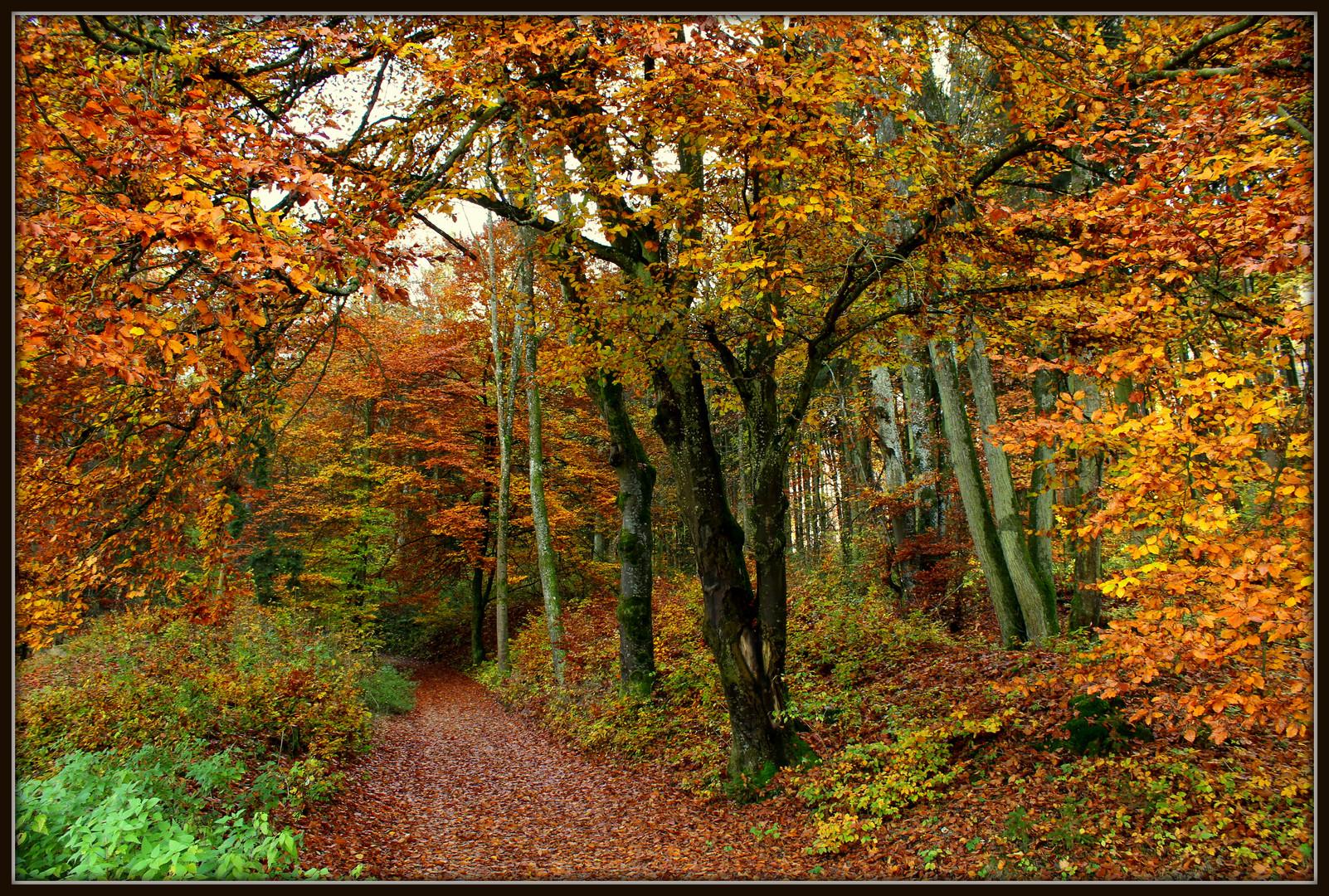 Altmühltal im Herbst 1