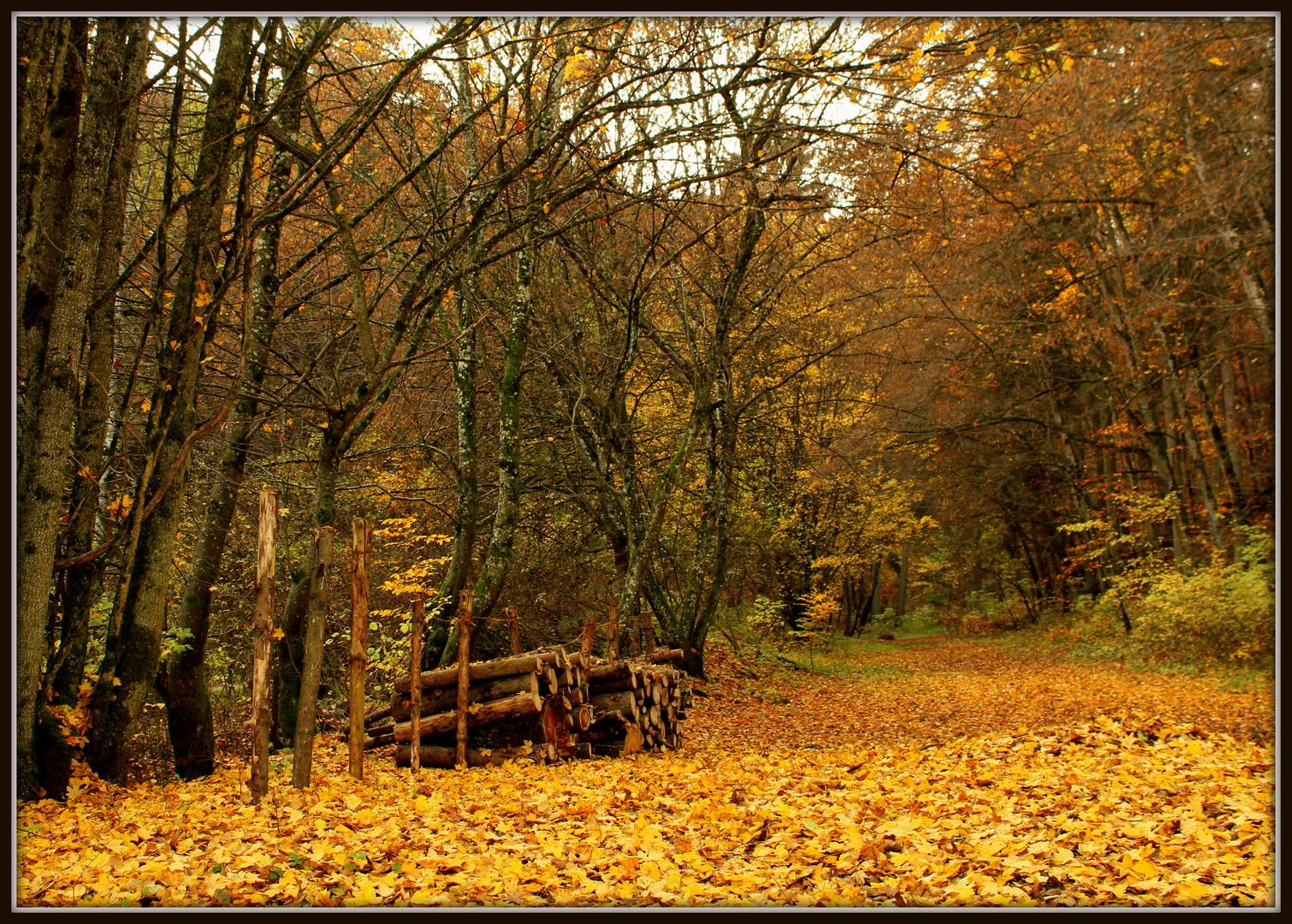 Altmühltal im Herbst 2