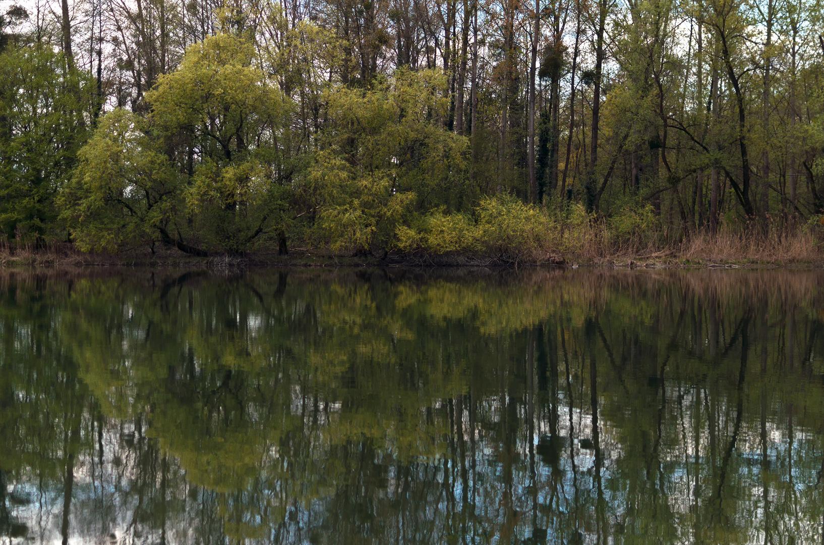 Altrheinarm im Frühling